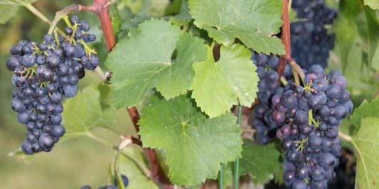 Edeka Klein – Weinreise 14.09. 2011